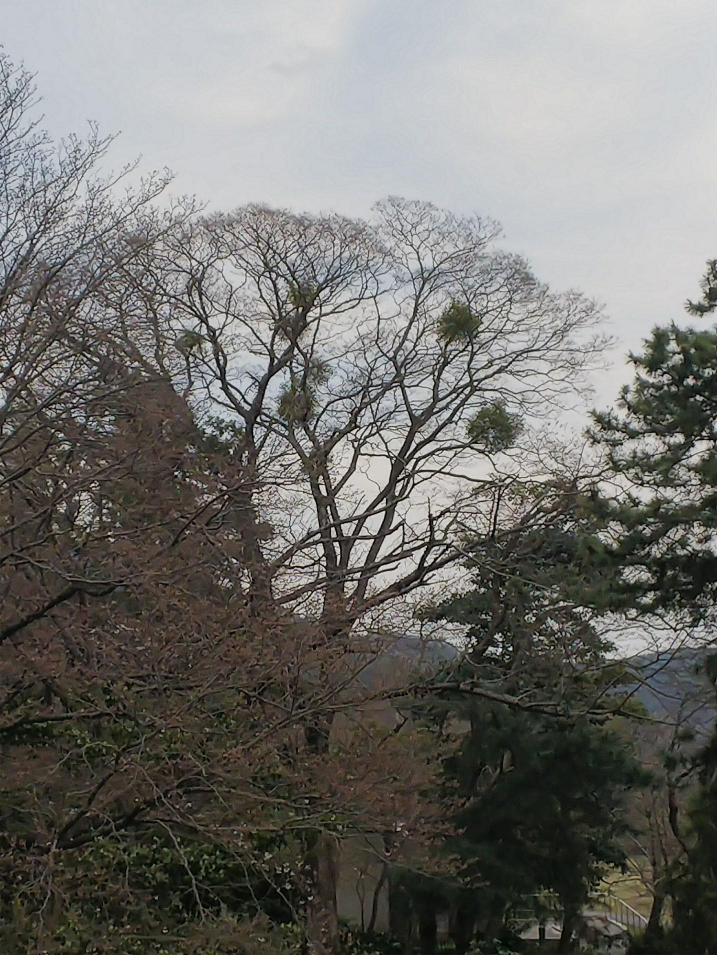 宿り木ツリー